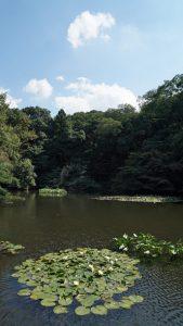 画像 明治神宮の南池