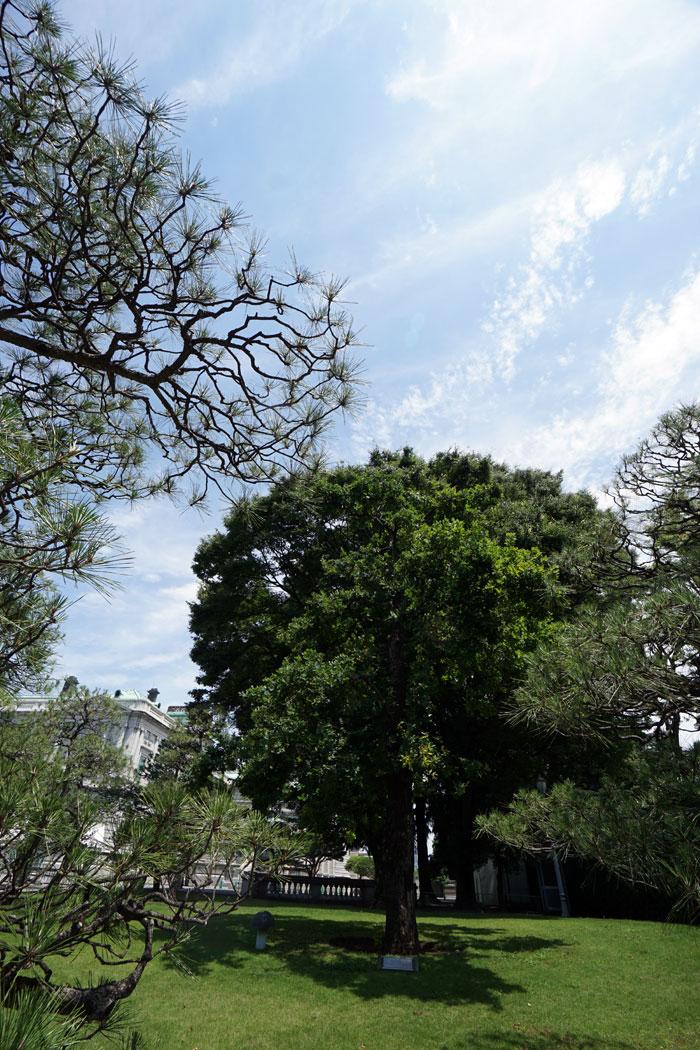 画像 迎賓館 エリザベス女王が植樹したイングリッシュオーク