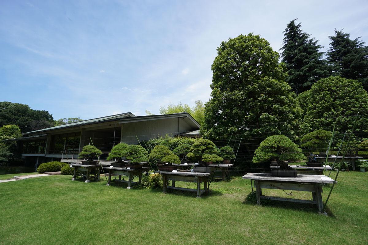 画像 迎賓館和風別館 「游心亭」(ゆうしんてい) 黒松の盆栽