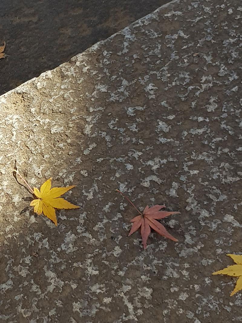 石段の上の落ち葉